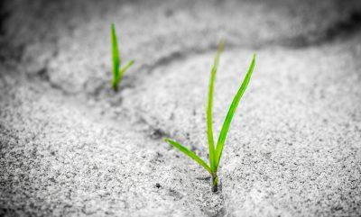 petites feuilles qui poussent spontanément