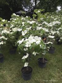 Stand de la pépinière Ebert pendant les Journées des Plantes à Chantilly