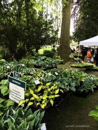 Journées des plantes de Chantilly 2016 - Stand de vente d'hostas