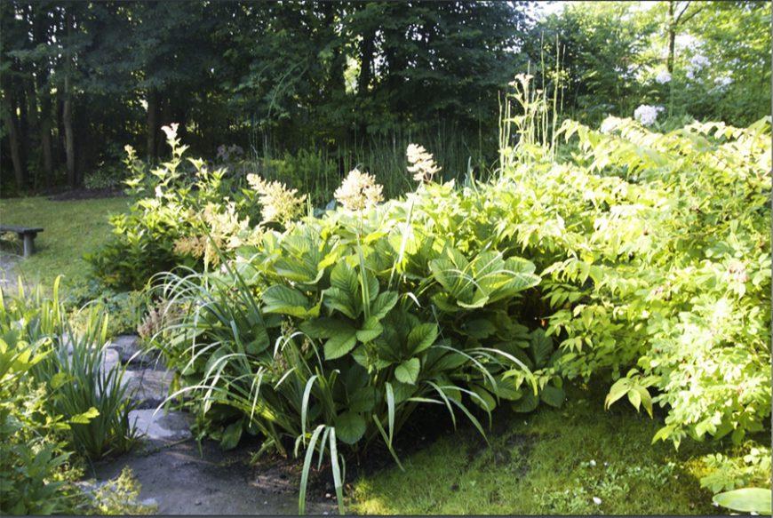 Styles de jardins - jardin exubérant avec plein de plantes vertes