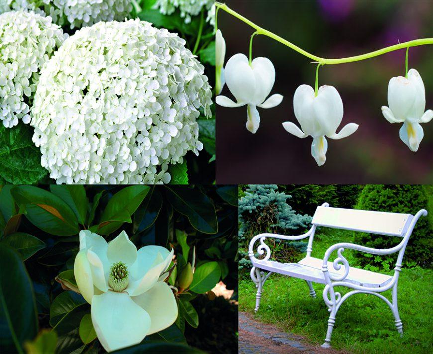 Styles de jardins - jardin avec une dominante de blanc - monochrome