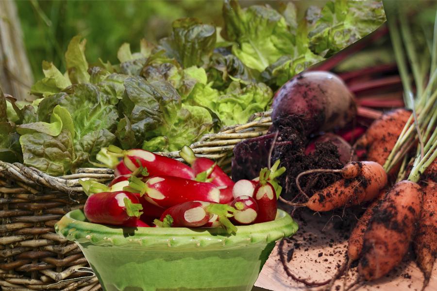 exposition de légumes divers pouvant pousser sur balcon
